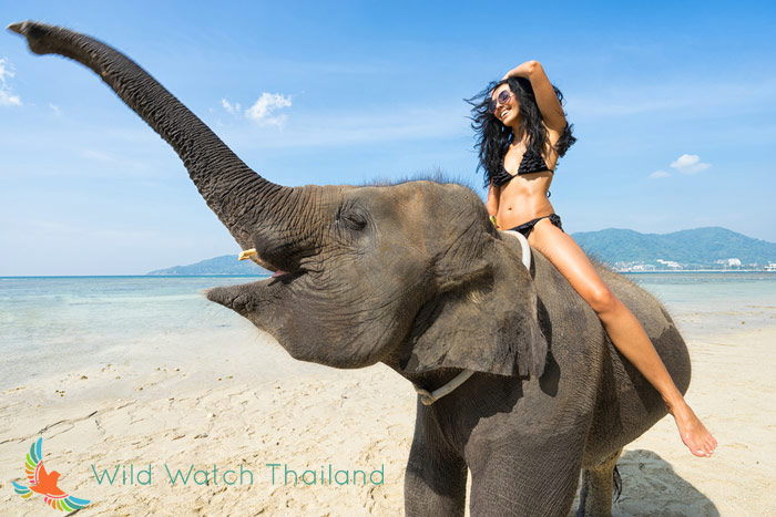 Wild Watch Thailand